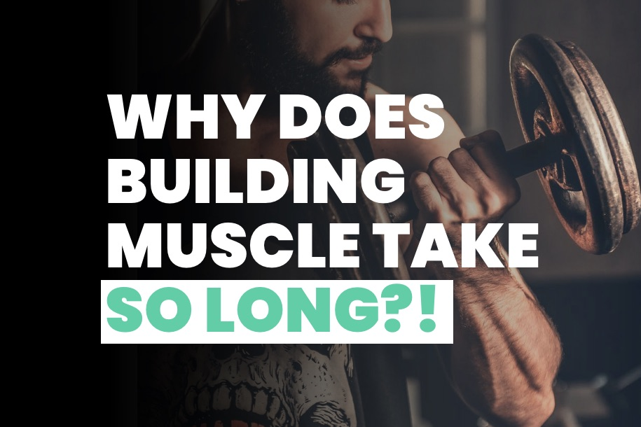 Why Does Muscle Building Take So Long